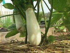 Liveseeds - Eggplant White Long Asian Solanum Garden Vegetable Edible 20 seeds