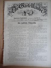 1907  Japan Botanik Schwertlilie Gartenbau