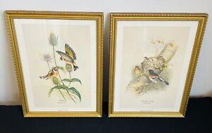 Pair Antique Framed Bird Prints by John Gould Goldfinch & Bramble Finch Gilt