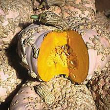 French Heirloom Pumpkin  -  *Galeaux D'Eysines*  -  (Cucurbita maxima) - 5 seeds