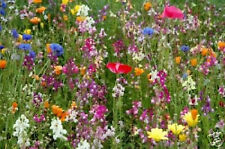 1OZ WHOLESALE Hummingbird & Butterfly Flower Mix ~Attract Bees Beautiful Flowers