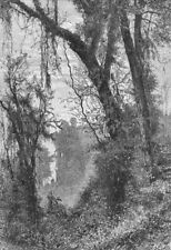SIKKIM. Forests of-Birch Hill, N of Darjiling c1885 old antique print picture