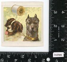 2 Dogs St Bernard pit bull J P Coats Victorian Trade Card Schumacher & Ettlinger