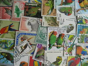 Topical hoard breakup 35 parrots, budgies. Mixed condition, few duplicates