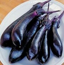 Eggplant Seeds 50 Millionaire Purple Seeds 60 Days