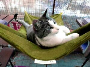 LUXURICAT HAMMOCK, OLIVE & BOTTLE GREEN REVERSIBLE, CAT BED, CAT LOUNGER