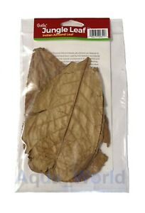 Carib Sea Jungle Leaf Indian Almond Natural Habitat for Tropical Fish