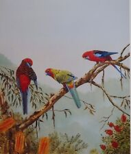 "Josephine Anne Smith, "" The Preening Lesson "" Australian Birds, Rosella/Lorikeet"