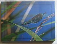 FOTO auf LEINWAND*40 x 30 cm*PRACHTLIBELLE*Bild*Wanddeko*Insekten*Natur*NEU