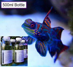 500ml Live Copepods (Zooplankton Mix) Marine Reef Fish Coral Food Rotifers