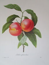 P. J. Redoute 95 Pecher a fruits lesses vintage print