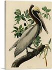 ARTCANVAS Brown Pelican Canvas Art Print by John James Audubon