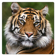 Kühlschrank - Magnet: Bengalischer Tiger - wunderbares Porträt