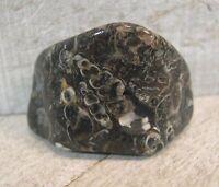 1 Turritella Agate Pocket Stone Reiki Wicca Grounding Protection 25767E