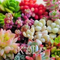 500 PCS Seeds 22 Kinds Mix Succulent Lithops Pseudotruncatella Bonsai Plants New