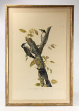 Aquatint Engraving Ornithology AUDUBON/HAVELL ORIGINAL c1838 Birds O... Lot 7002