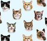 Pet Selfies Cats Faces Animals Elizabeth's Studio 100% Cotton Fabric by the yard