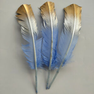 10-100pcs Beautiful 25-30 cm/10-12 inches Natural Turkey Feathers For Decoration