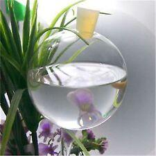 6 Stück große Durstkugeln - Bewässerungskugeln leicht zu befüllen ! Top Qualität