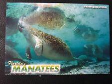 Postcard Unused Florida, Manatees Living On The Space Coast, Endangered Species
