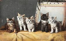POSTCARD    CATS   Country  Cousins