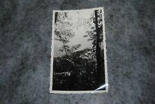 (ETA) photo vintage 1930- 1939 brésil foret de tijuca