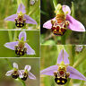 50pcs rare smile face bee orchid flower seed garden plant seeds