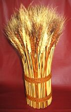 Decorative Bundle of Dried Natural Red & White Wheat Grass