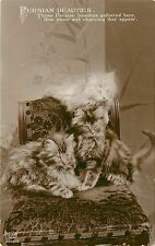 Vintage EAS Real Photo Cat PC Kittens Persian Beauties Ornate Upholstered Chair
