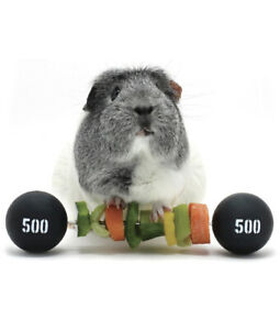 HAYPIGS Guinea Pig Toys and Accessories - Circus themed PIGGY WEIGHTLIFTER...