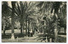 CPA - Carte Postale - France - Nice - Allée de Palmier au Château - 1906