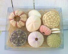 More details for real sea urchins gift pack of 10 seashells sputnik urchins sand dollars