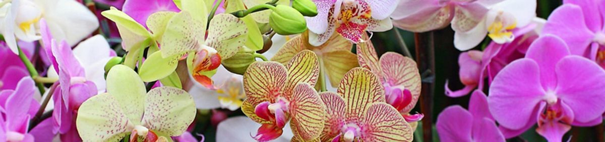 Jamie's Orchids & More