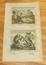 1796 Antique Print/MICO, OISTITI, SAKI, PINCHE