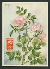 BULGARIA MK 1953 FLORA HUNDSROSE DOG ROSES MAXIMUMKARTE MAXIMUM CARD MC CM d6346