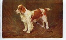 "(Ld7086-471) F T Daws,  Dog, The Welsh Springer ""Ch Longmynd Calon Fach"" Unused"