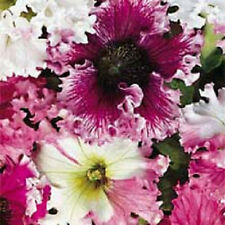 100 Petunia Seeds Non Pelleted Seeds Fluffy Ruffles Mix Seeds