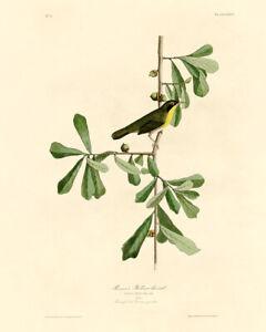 John Audubon Print - Roscoe's Yellow Throat