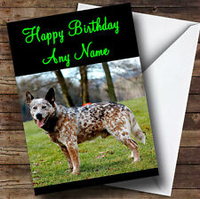 Australian Cattle Dog Personalised Birthday Greetings Card