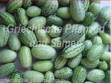 Mini–Gurke* toll im Salat und zum einlegen reicher Ertrag 6 frische Samen Gurken