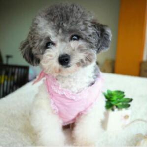 Dog Harness Soft Vest Leash Pet Puppy Dress Pink for yorkie Schnauzer Size S M L