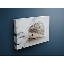 Small Spiny Hedgehog 12x18 Canvas Wrap Wood Frame
