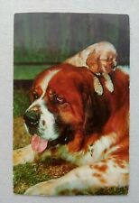 Printed Postcard - Cute St. Bernard Dog and Puppy