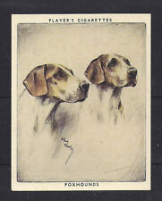 1939 Arthur Wardle Dog Art Head Portrait Player Cigarette Card English Foxhound