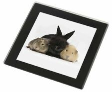 Paintings/Posters/Prints Rabbit Collectables
