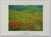 Azalea Utsukshigahara Heights Postcard (P326)