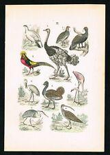 1880 Golden Pheasant, Turkey, Flamingo, Partridge, Hand-Colored Antique Print