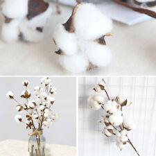 10 Heads Natural Dried Cotton Flower Home Decor Artificial Plants Cotton Stem