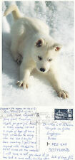 1994 PUPPY IN THE ALPS FRANCE COLOUR POSTCARD