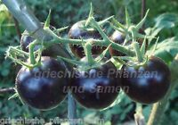 🔥 🍅 DANCING WITH THE SMURFS blau lila Tomate 10 Samen Tomaten für Balkon